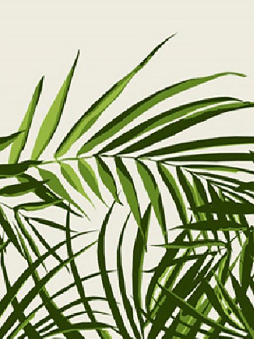 Palme vert
